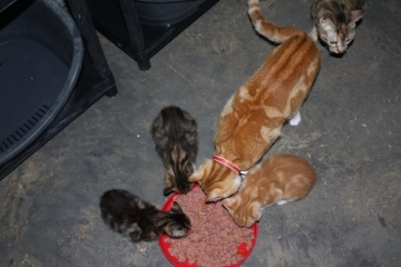 tommy-and-kittens