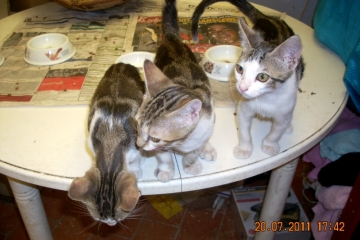 cella-milly-henry
