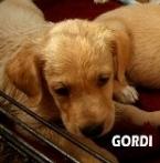 gordi-1