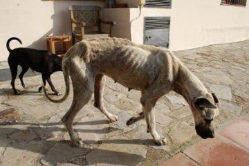dogge-5