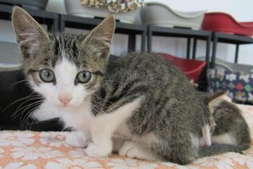 hugo-cat