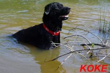 koke-2