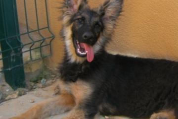 lisa-vorne