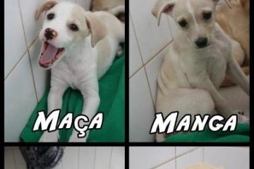 maca-1