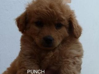 punch-1
