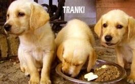 tranki-2