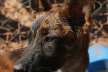wolf-vorne-neu
