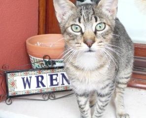 wren-1