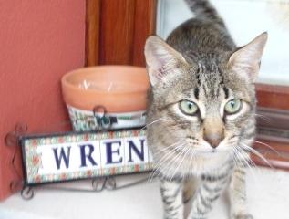 wren-2